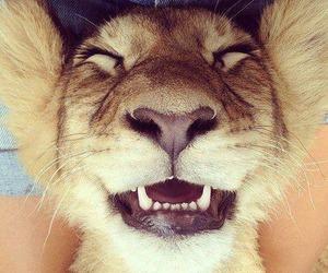 lion, animal, and smile image
