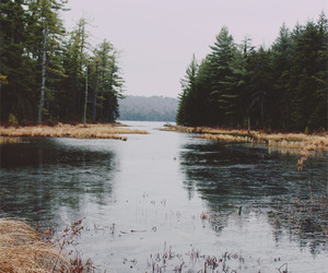 nature, forest, and photography image