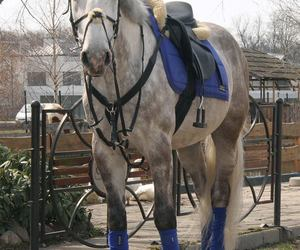 blue, equestrian, and horse image