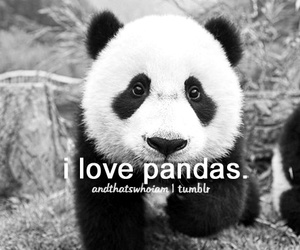 quote, panda, and text image