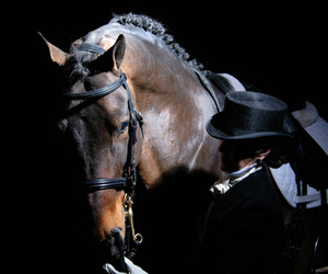 beauty, brown, and dressage image