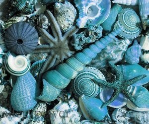 shell, blue, and sea image