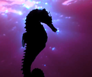 seahorse, sea, and animal image