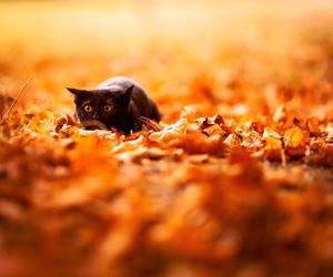 animal, black, and autumn image