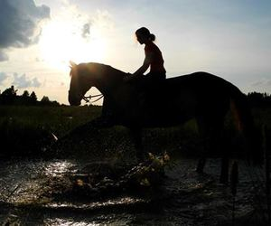 friendship, horse, and horses image