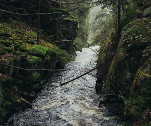 landscape, moss, and nature image