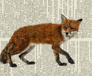 fox and book image