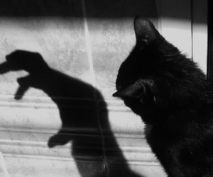cat, black and white, and shadow image