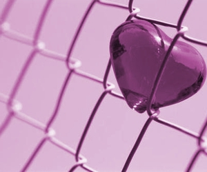 gate, heart, and lilac image