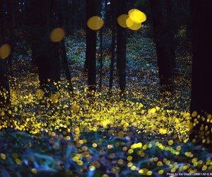 fireflies image