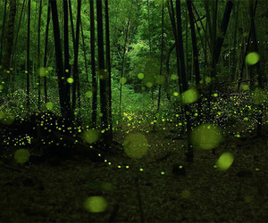 forest, fireflies, and green image