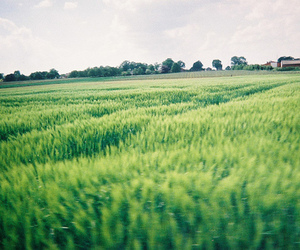 green and grass image