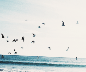 birds, beach, and sky image