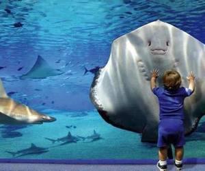 baby, fish, and animal image