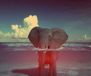 elephant, summer, and funny image