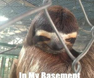 sloth, funny, and creepy image