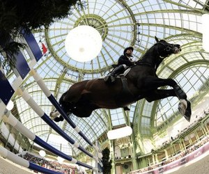 adrenalin, arena, and equestrian image