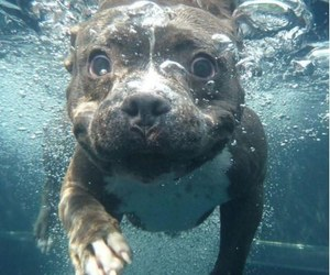 dog sweet water omg image