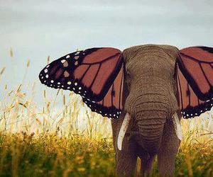elephant, butterfly, and nature image