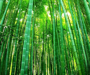 bamboo, breathtaking, and zen image