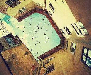 bird, sky, and building image