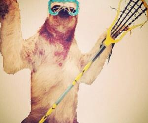 funny, sloth, and lacrosse image