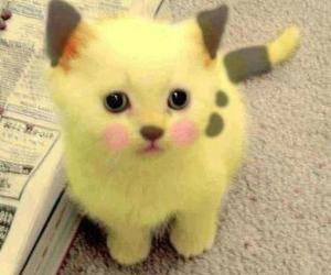animal, pikachu, and yellow image