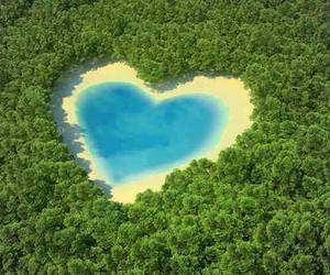 heart, nature, and forest image