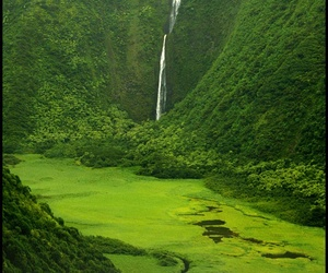 photography, green, and nature image