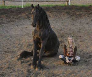 beautiful, black, and horse image