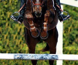 beautiful, clever, and equestrian image