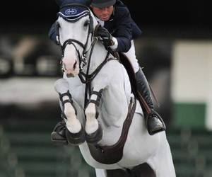 beautiful, equestrian, and horse image