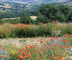 flowers, view, and summer in england image