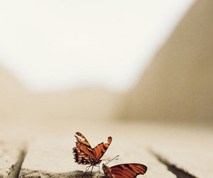 butterfly, nature, and photography image