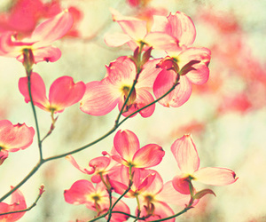 morning light, flowers, and pink image