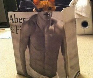 cat, funny, and bag image