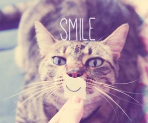 smile and cat image