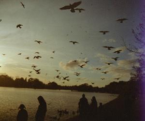 bird, sky, and vintage image