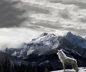 wolf, mountains, and nature image