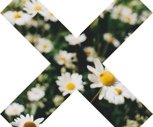flowers, the xx, and transparent image