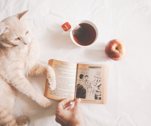 apple, white, and cat image