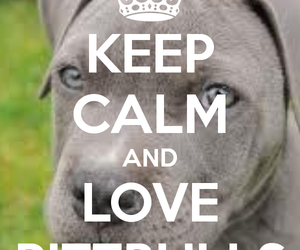cute, pittbulls, and handsome dogs image