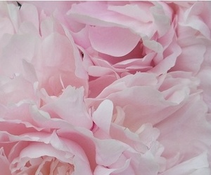 beauty, pretty, and pink image