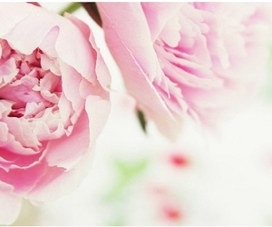 beauty, pretty, and peonies image