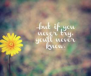 quote, flowers, and try image