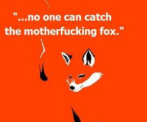 fox, looking for alaska, and john green image