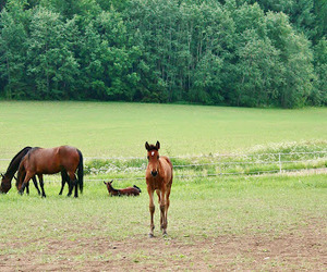 equestrian, horse, and foal image