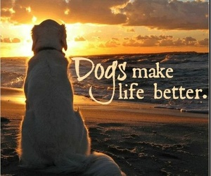 dog, life, and quote image