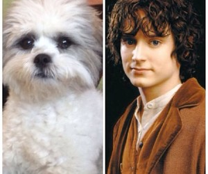 adorable, LOTR, and pet image