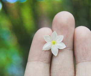 colorful, flower, and hands image